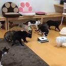chats-peur-robot-aspirateur
