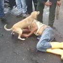 miniature pour Un chien ne laisse personne approcher son maitre ivre-mort
