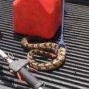 serpent-sans-tete-attaque-toujours