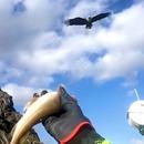 miniature pour Un aigle attrape un poisson jeté dans les airs