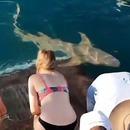 miniature pour Une fille se fait mordre le doigt en donnant à manger à un requin