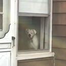 miniature pour Une maison protégée par un chien impossible à cambrioler