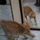 chat-caca-miroir