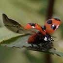 miniature pour L'envol de 28 insectes