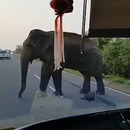 elephant-peage-route