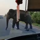 miniature pour Un éléphant fait le péage sur une route