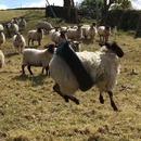 mouton-balancoire-pneu