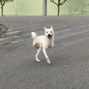 miniature pour Un chien a deux pattes marche normalement