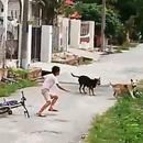 enfant-courageux-face-2-chiens