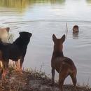 peur-chiens-etang
