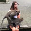 miniature pour 2 singes baisent sur les jambes d'une fille