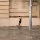 miniature pour Un chat lutte pour ne pas mourir dans les inondations