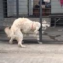 barriere-arrete-pas-chien-chaleur