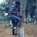 appareil-grimper-palmiers