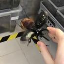 scarabee-ventilateur