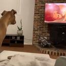 chien-triste-mort-mufasa-roi-lion