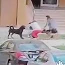 femme-corps-proteger-enfant-attaques-chiens