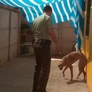 chien-remercie-policier-aide
