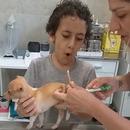 Un enfant découvre comment le vétérinaire prend la température de son chiot