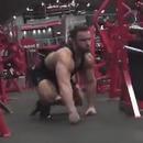 gorille-male-salle-gym