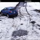 Un chien sauve un chiot de la marche arrière d'une voiture