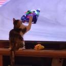 miniature pour Un chat fait tomber un motard