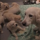 chienne-apprend-chiots-patients-teter