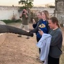 elephant-coup-trompe-fille