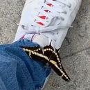 marcher-papillon-chaussure
