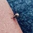 moustique-arrive-pas-piquer-peau