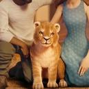 miniature pour Le lien amer d'un lion et son élevage en Afrique du Sud