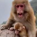 maman-singe-aime-pas-manger-petit