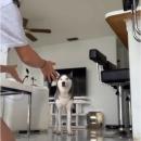 chien-pas-envie-brosser