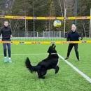 jouer-volley-ball-chien
