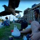 Un faucon lui vole son sandwich