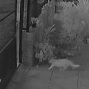 Un chat coincé par un portail automatique