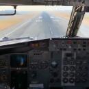 Un oiseau s'écrabouille sur la vitre d'un avion