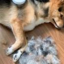 fabriquer-chien-propres-poils