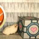 Hamster vs Niveau Portal
