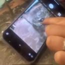 Une araignée qui réagit quand on la touche sur l'écran d'un smartphone