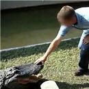 crocodile-une-main