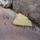 fourmis-chips-travail-equipe