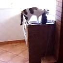 peu-exercice-pour-chat-avant-manger