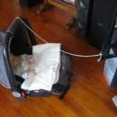 bercer-bebe-avec-lecteur-cd