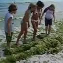 algues-aux-formes-humaines