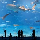 kuroshio-sea-deuxieme-plus-grand-aquarium-monde