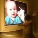chaton-regarde-funny-cats