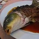 poisson-servi-vivant
