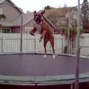 chien-trampoline