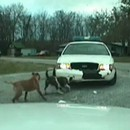 chien-attaque-voiture-police